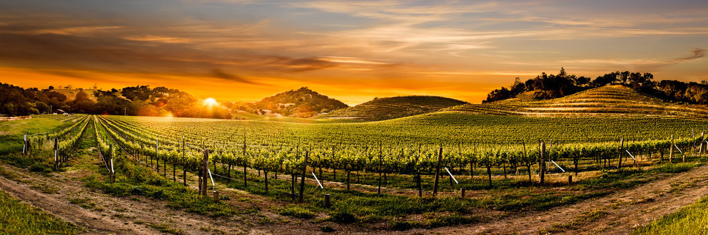 Travel in Napa Valley Wine Country Vacation