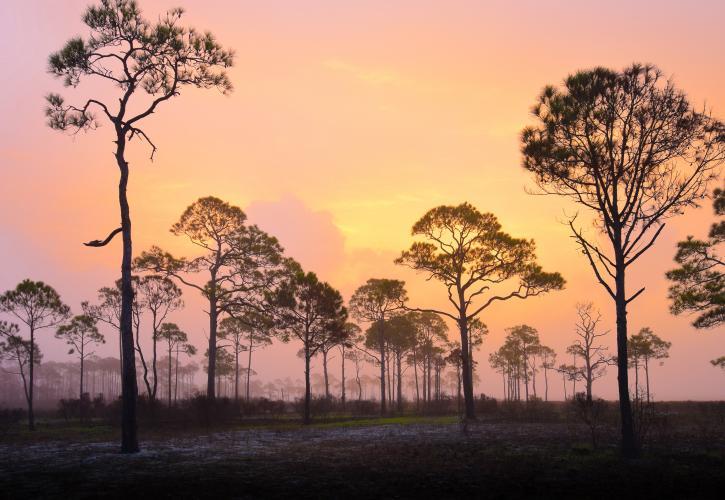 Beautiful trees at sunset