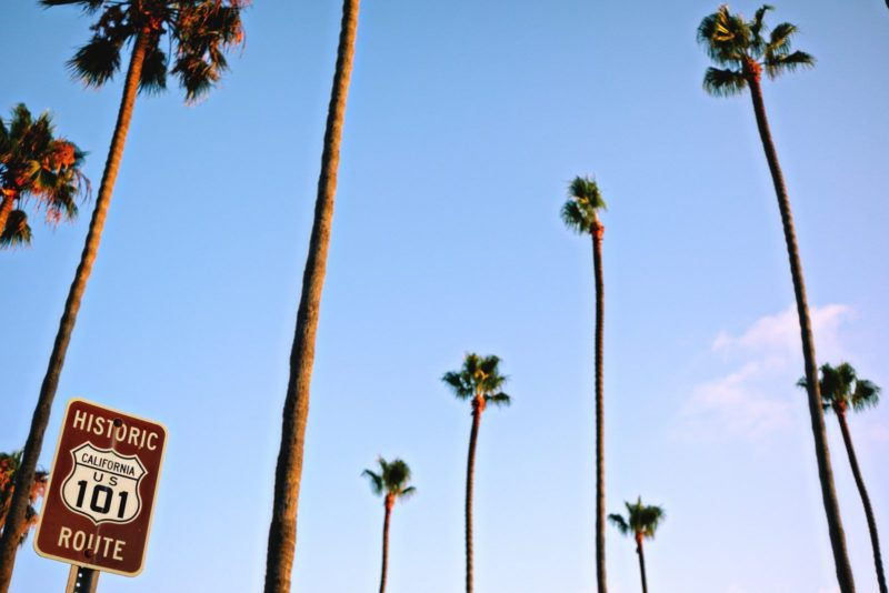 The palm tress of California just off of the US 101. A great site to see!